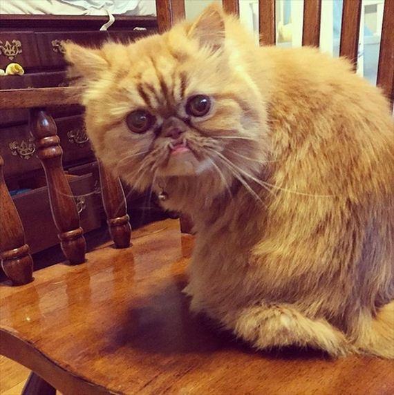 evil_cats