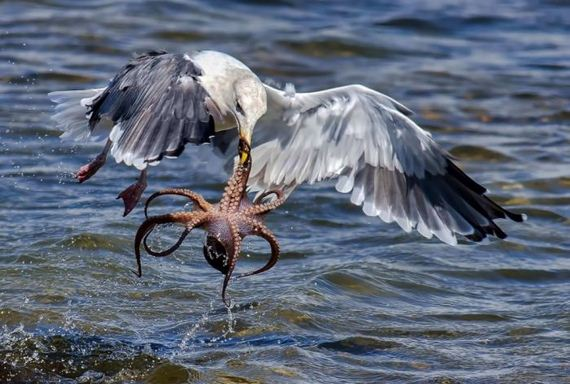 gull_and_octopus