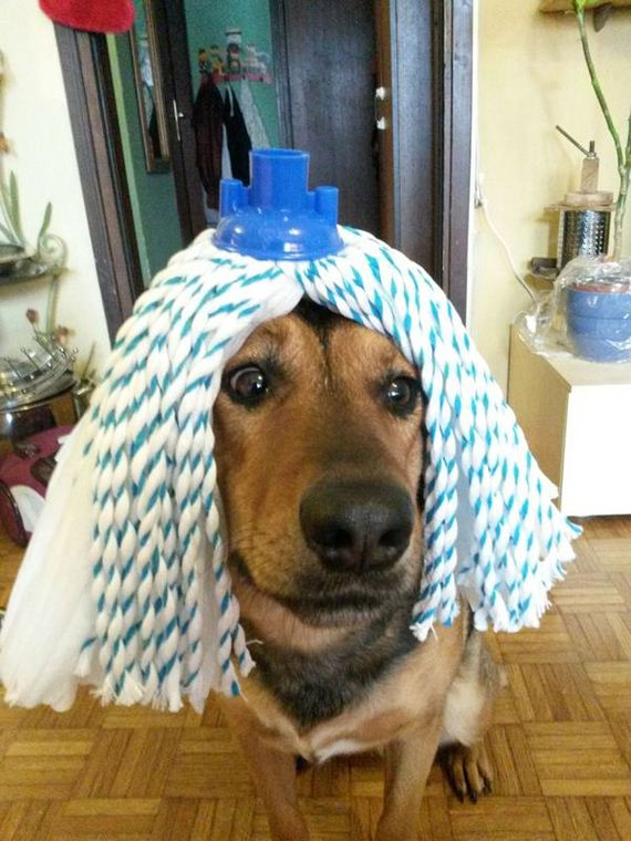 Adorable-Dogs-Wearing