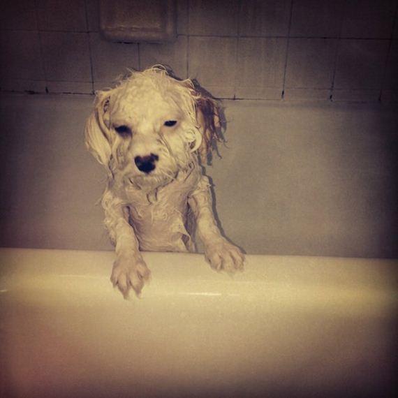 Have-Puppy