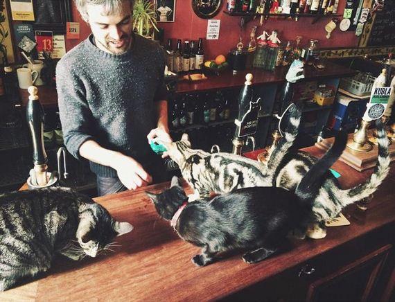 cat_pub