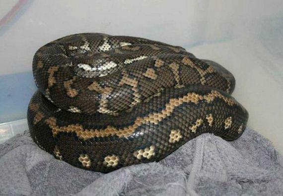 python_drainpipe