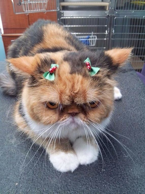 Cats-Christmas