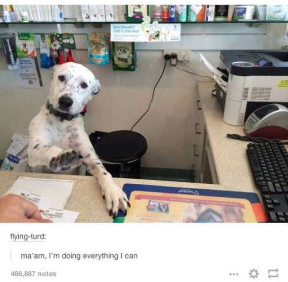 amusing_tumblr_posts
