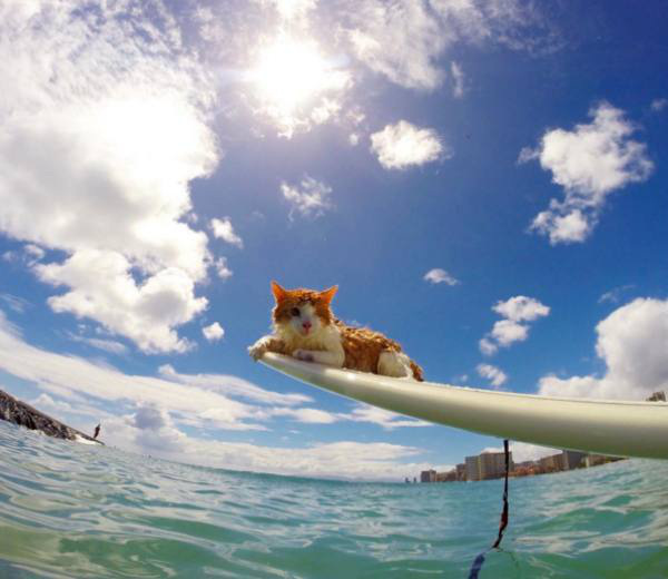 eyed-surfing-cat
