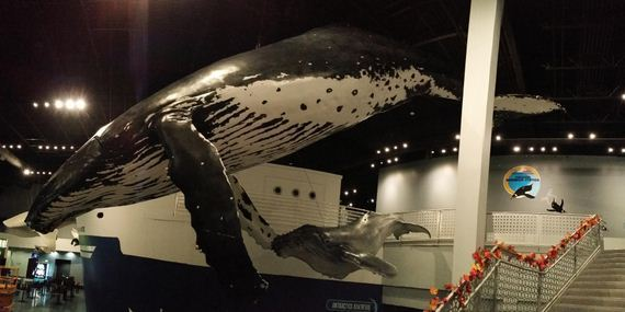 life-size-humpback