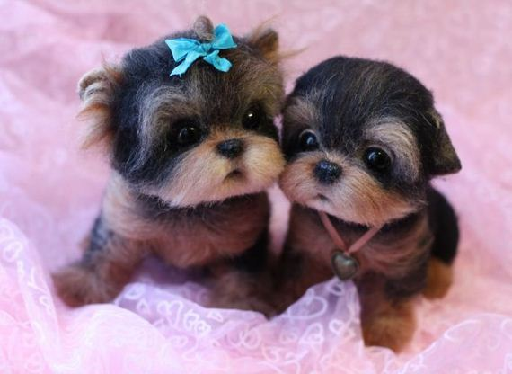 adorable_little_animals