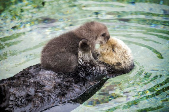 baby_otter
