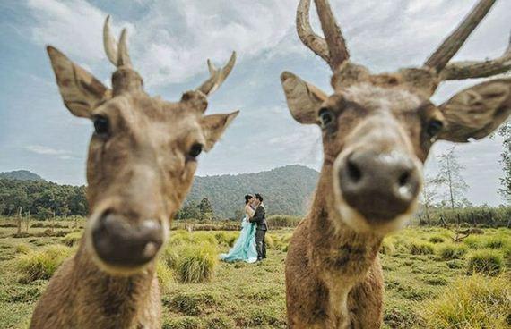 funny_wedding_photos