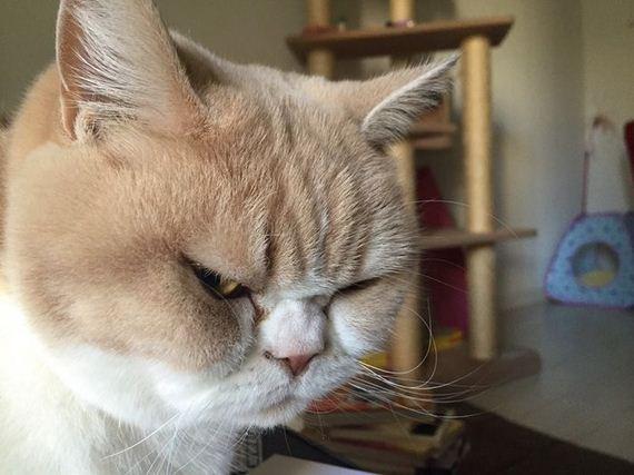 japanese_grumpy_cat