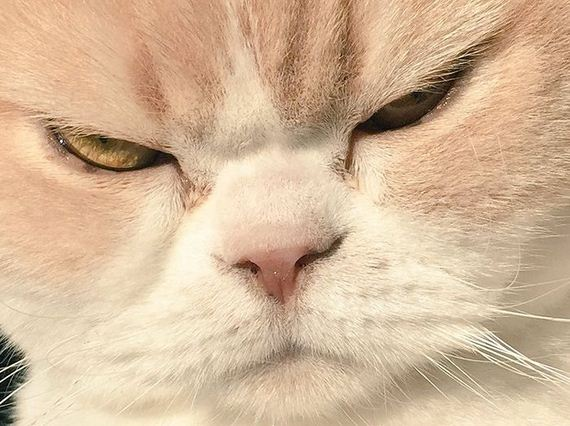 japanese_grumpy_cat