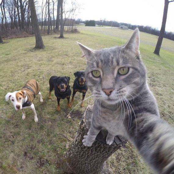 selfie-tree