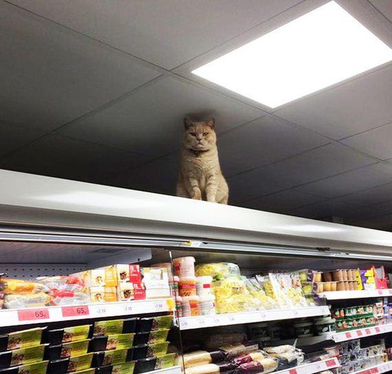 supermarket_london