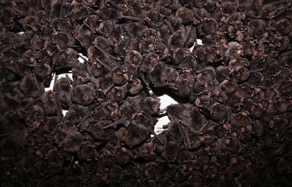 thousands_bats