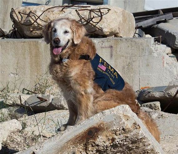 9_11_search_dog