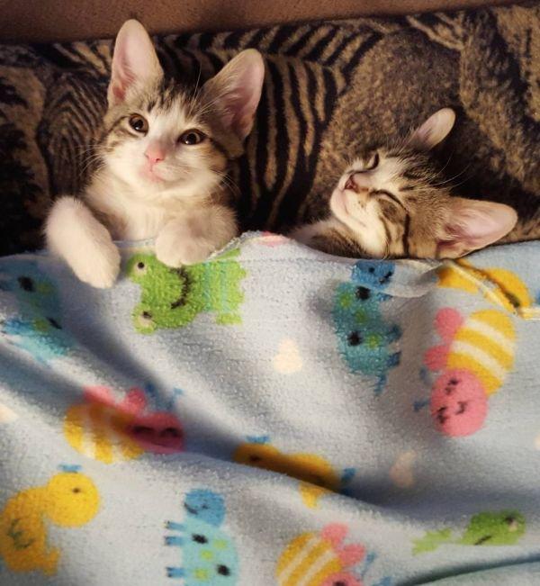 Cat-Monday-6-27