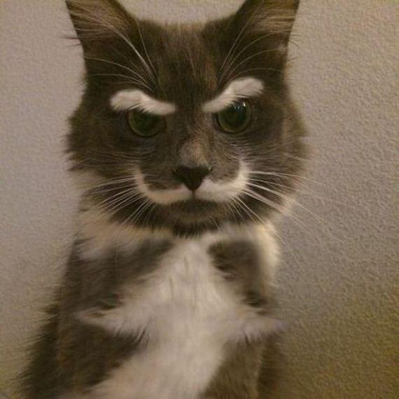 Cat-mondey