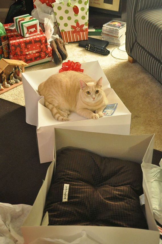 Cats-you-gifts