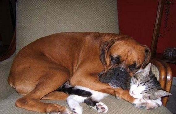 Funny-Pets