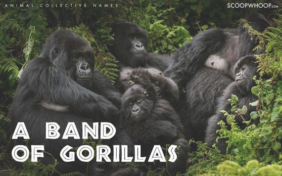 Most Interesting Facts >> Coolest Names for Groups of Different Animals - Barnorama