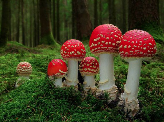 Magical-World-Mushrooms