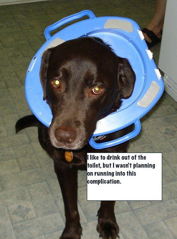 Public-Dog-Shaming