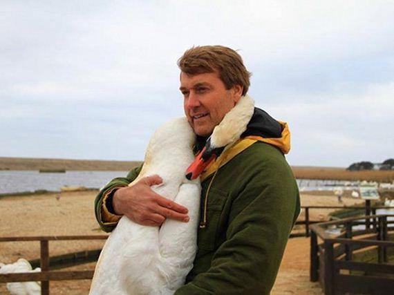 Rescued-swan