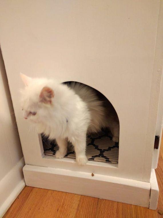 Transformed-Coolest-Pet-Accessory