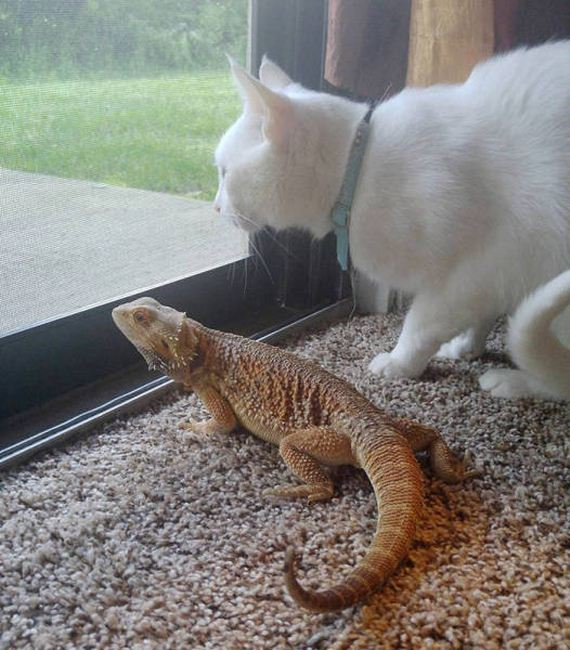 a_dragon_and_a_cat