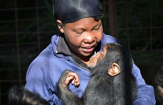 baby_chimp