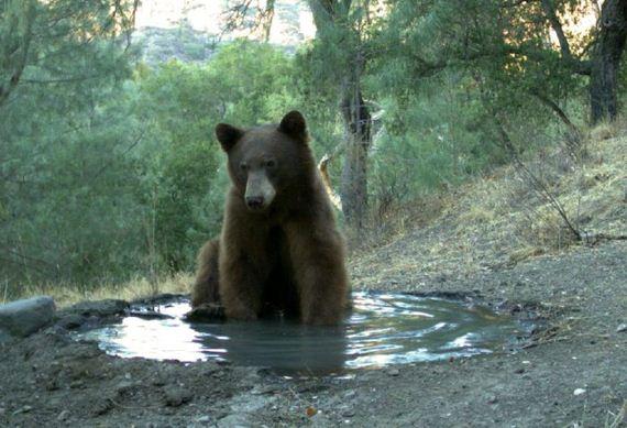 bad_bear