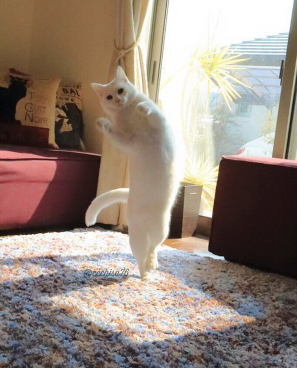 ballet-cat-dances