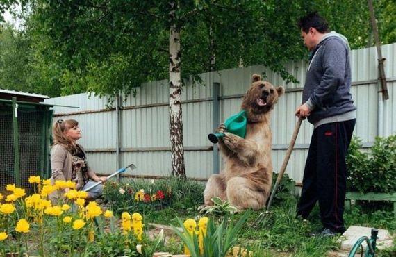 bear_family
