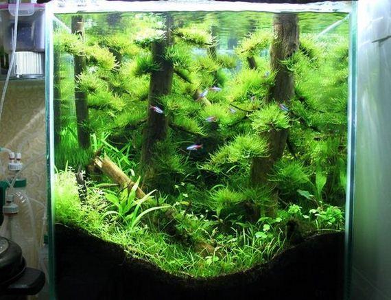beautiful_aquarium