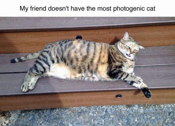 cat-saturday-24-photos