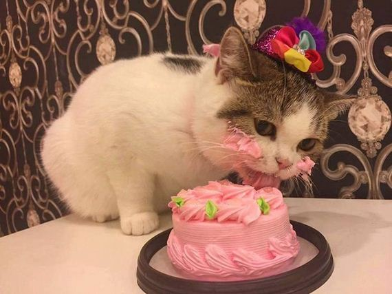 cat_eating_cake