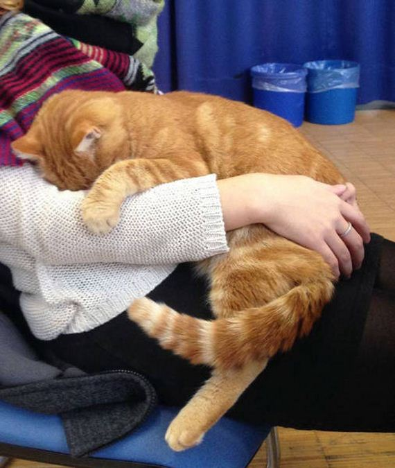 cat_gives_out_hugs