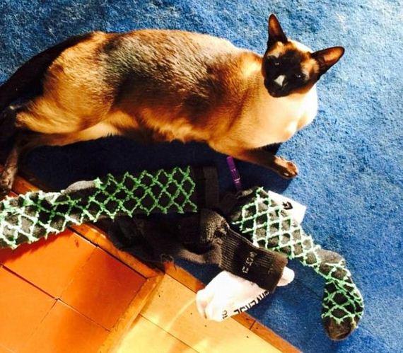 cat_steals_underwear
