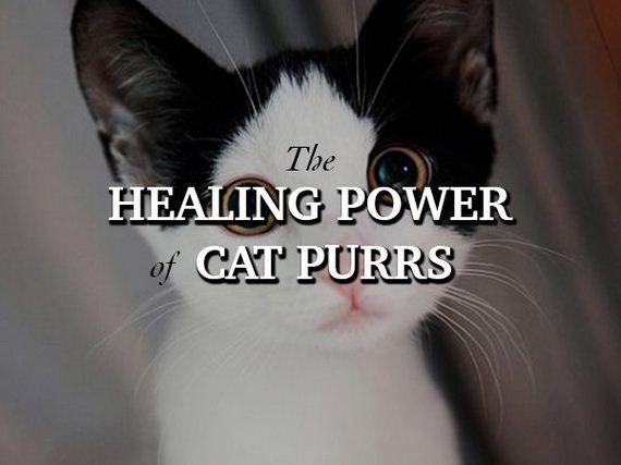 cats-will-heal-you