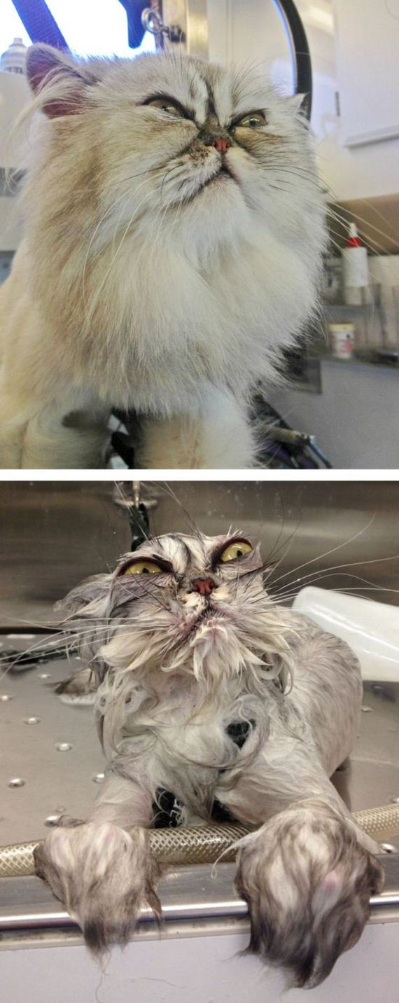 cats_bathed_01