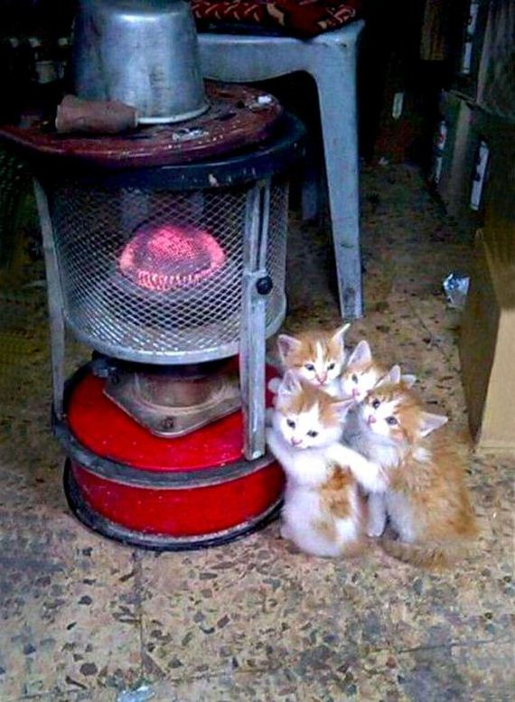 cats_enjoying_warmth