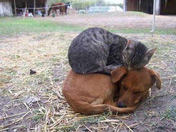 cats_enjoying_warmth