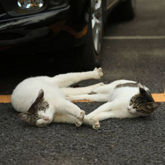 cats_of_tokyo