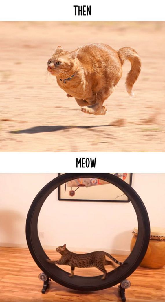 cats_then_now