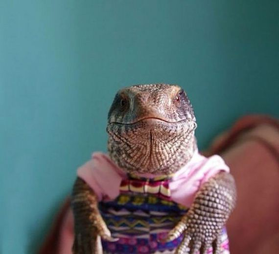 This Lizard Is Showing The World That Reptiles Can Be Cute