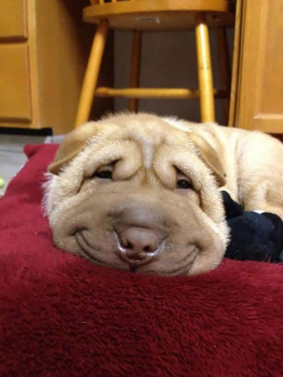 These Awesome Pictures Of Animals Smiling Are Beyond ...