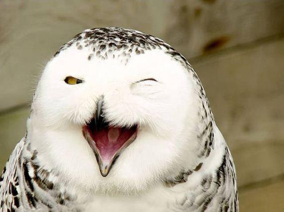 cute_smiling_animals