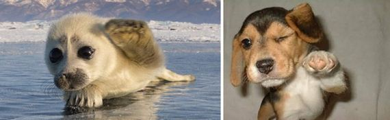 dogs_like_seals