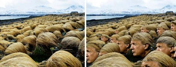 donald_trump_grows_his_hair