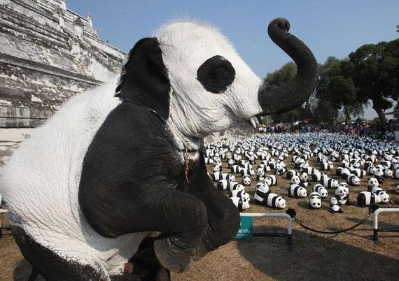 elephants_disguised_as_pandas